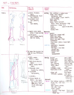05-arm-and-forearm-bones